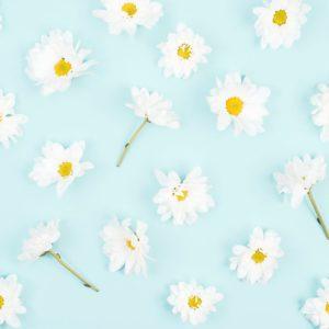 White Flower on Blue